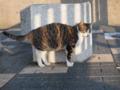 [猫]トラ猫