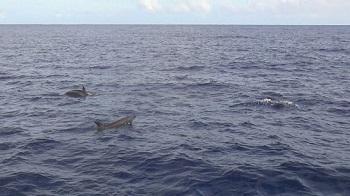 イルカのジャンプその2