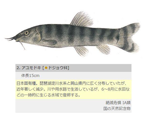 f:id:rjmatsumura:20170630024530j:plain