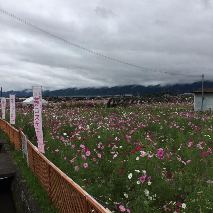 f:id:rjmatsumura:20171014030012j:plain
