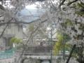 阪急電車&桜