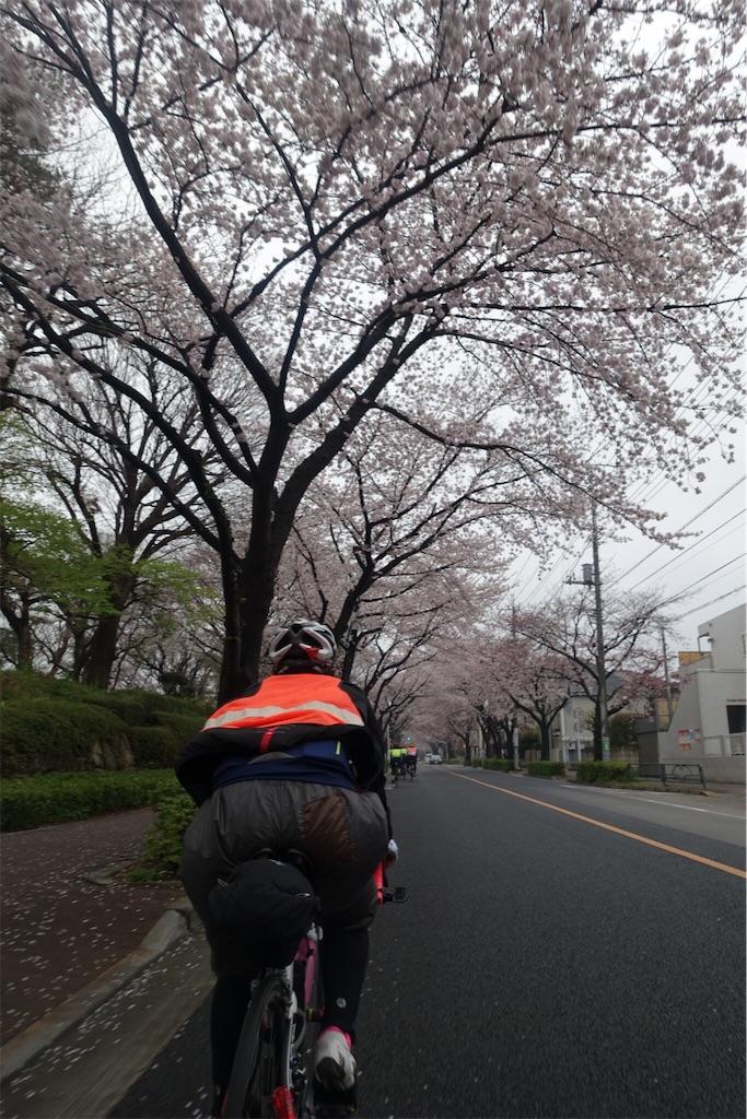 f:id:road_mushi:20190402175741j:image