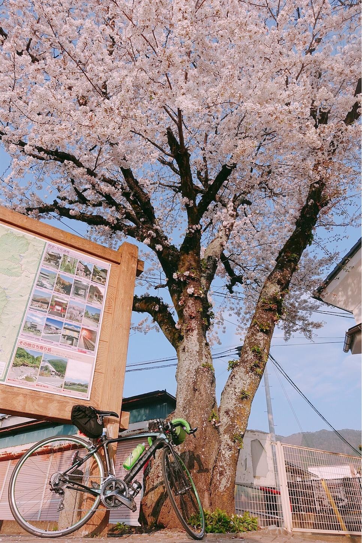 f:id:road_mushi:20190413053525j:image