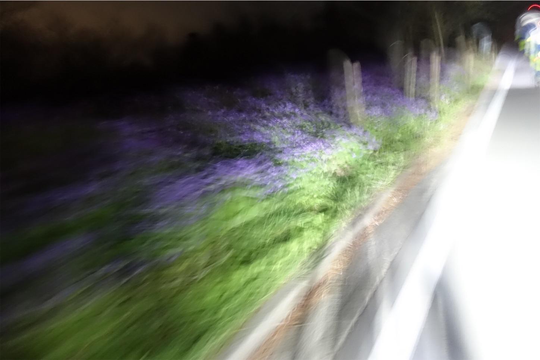 f:id:road_mushi:20190417224915j:image