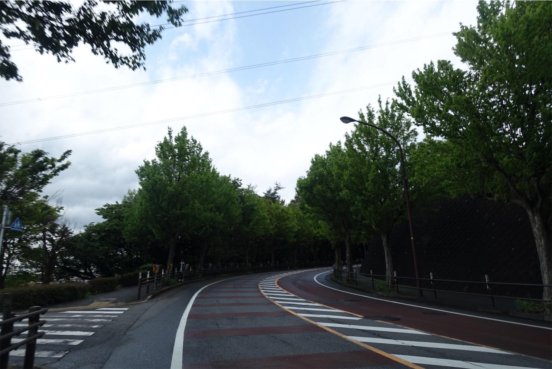 f:id:road_mushi:20190514175613j:image