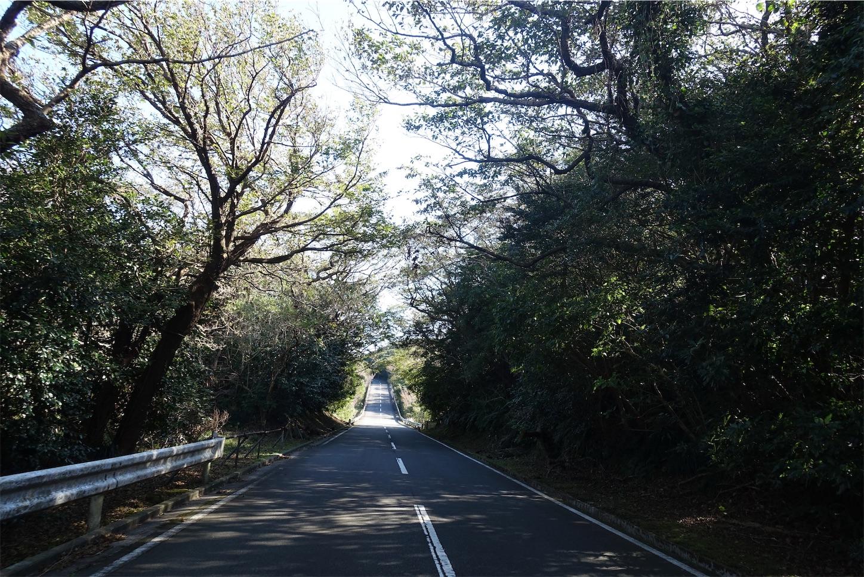 f:id:road_mushi:20191119183445j:image