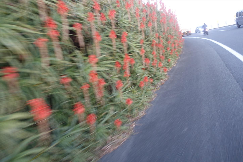 f:id:road_mushi:20200115175215j:image