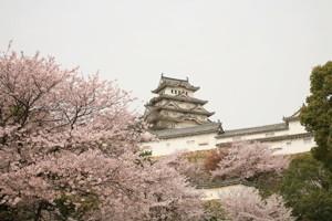 [姫路城][桜]