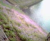 f:id:roadrunner:20060401162700j:image