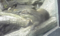 20100627134149