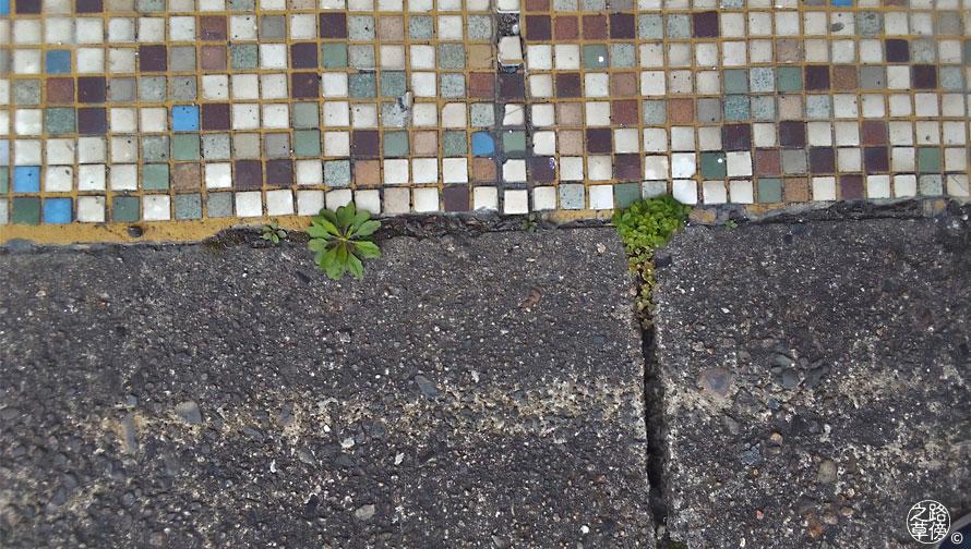 タイルの側の雑草