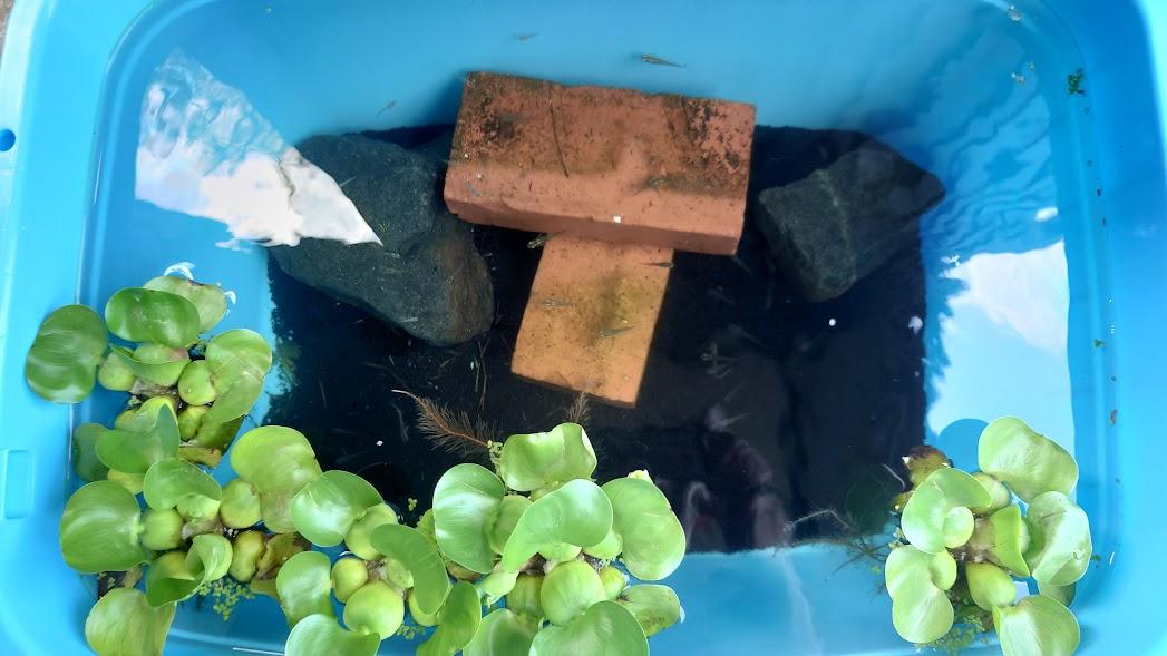 f:id:rockfish1973:20210802104028j:plain