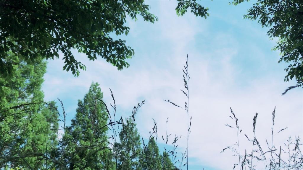 f:id:rokkotsu113:20200522123153j:image