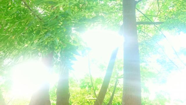 f:id:rokkotsu113:20201216180118p:plain