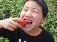 f:id:rokkoyuko:20080322165642j:image