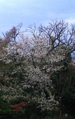 f:id:roko-sakura-2:20190328175258j:plain