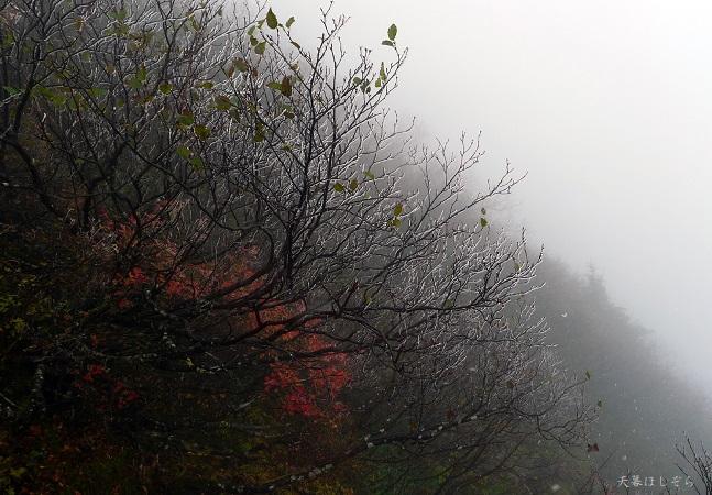 苗場山の樹氷