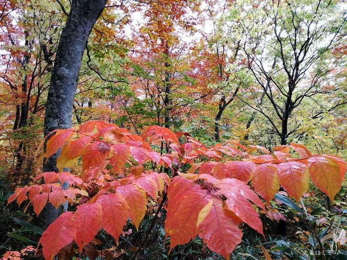 檜枝岐村の紅葉