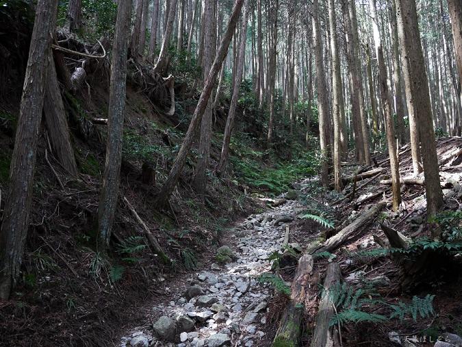 金剛山登山道