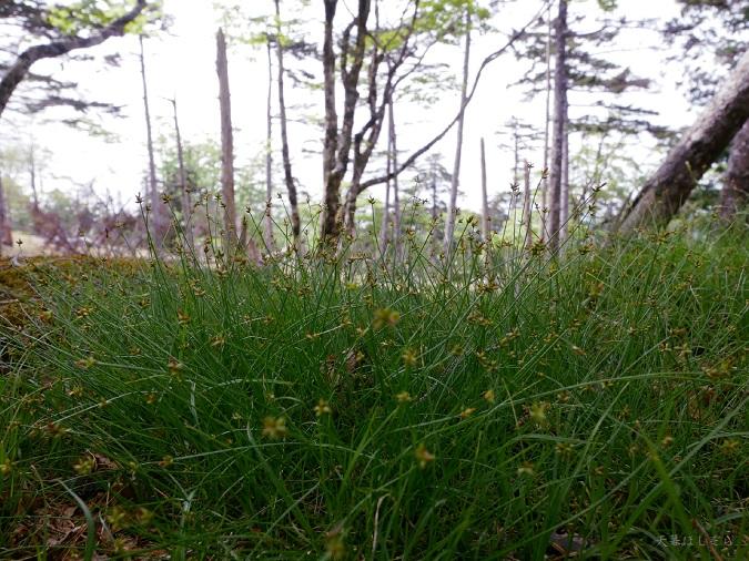 下草の新緑