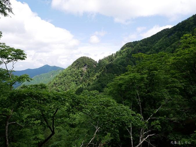 山頂の新緑