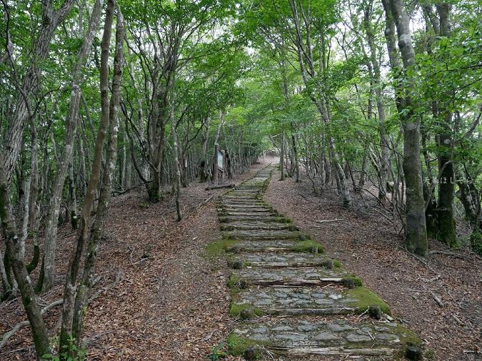 護摩壇山の登山道