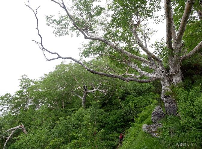 ブナ立尾根と登山者