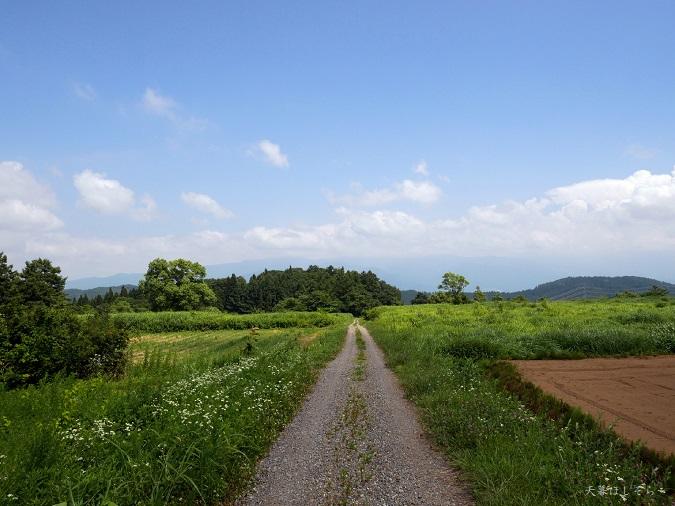 信越トレイルの農道