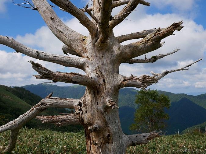 立ち枯れた木