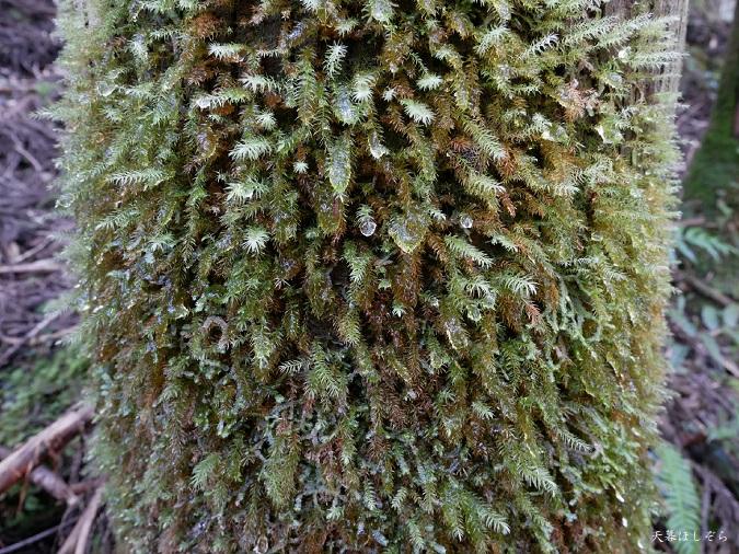 苔についた水滴