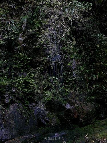 岩からしみ出す水