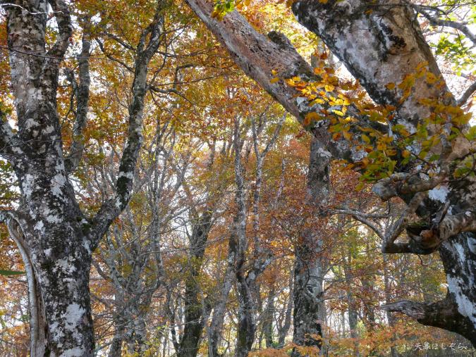 荒島岳の紅葉
