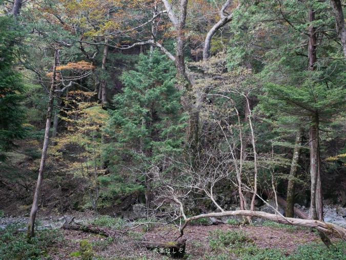 紅葉する木と倒木