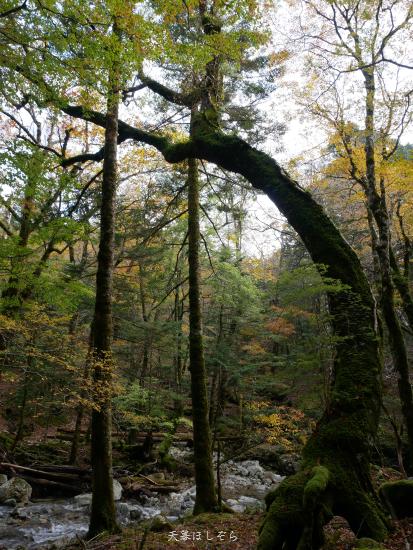紅葉の森と渓流