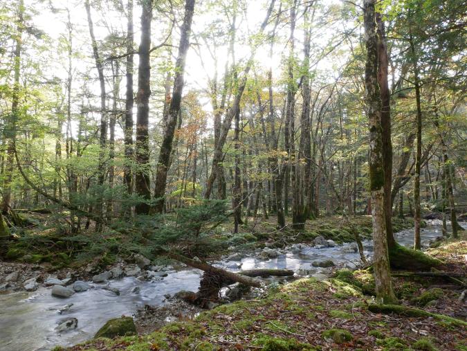 晩秋の森と渓流