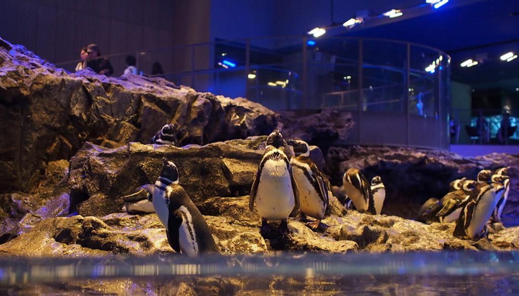 ペンギンパラダイス