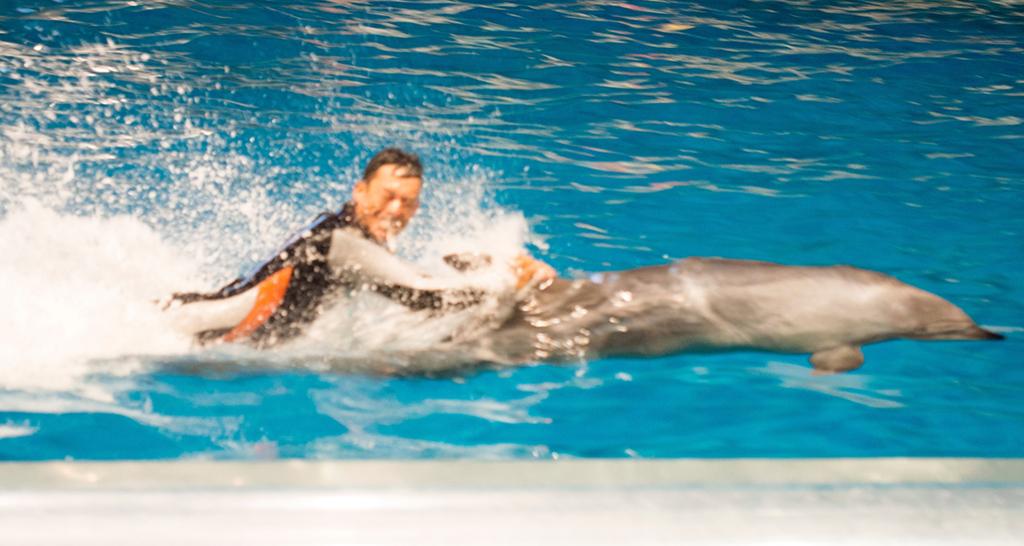 すごい速さで泳ぐイルカにつかまったスタッフ