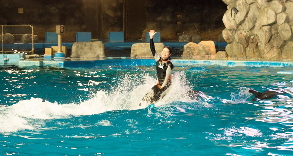 イルカの背中に乗るスタッフ
