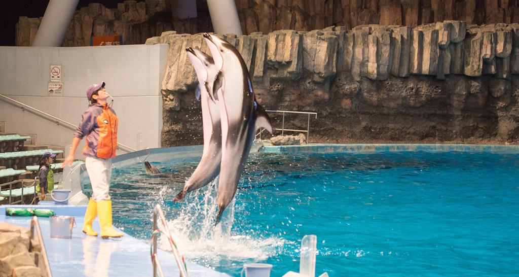2頭のイルカがスタッフの眼の前で直立飛び