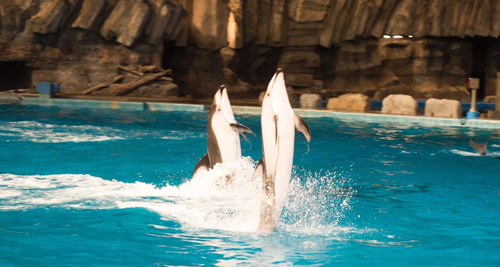 2頭のイルカが立ち泳ぎ