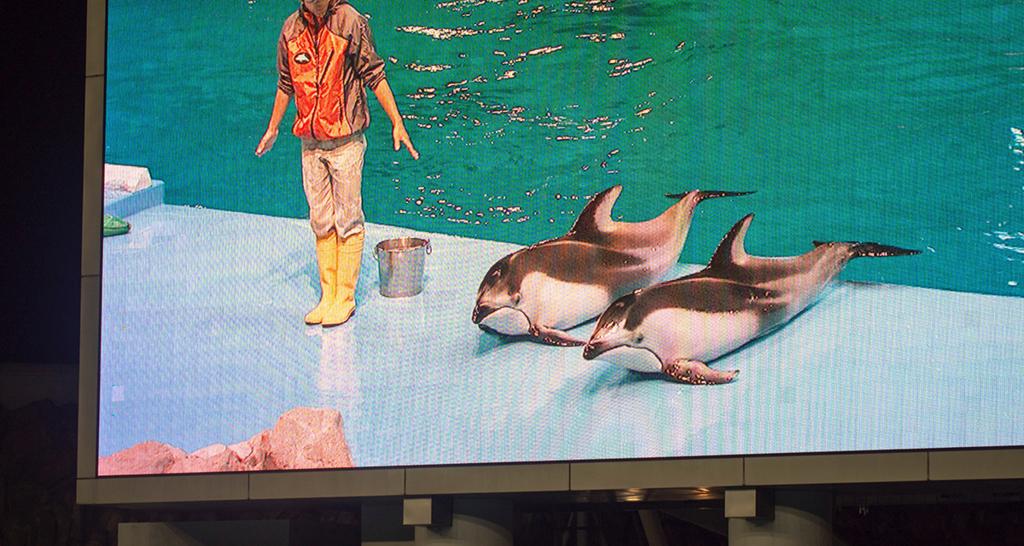 陸に上がった2頭のイルカを写す大型スクリーン