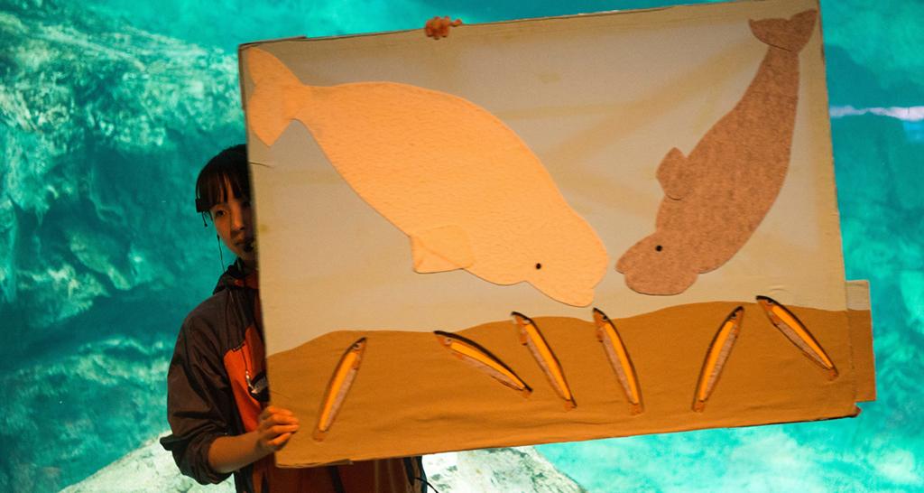 ベルーガが魚を食べる様子の図を持つスタッフさん
