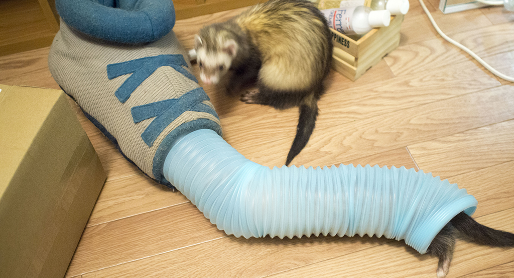 フェレットとジャバラトンネルと靴のおもちゃ