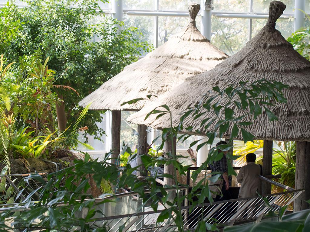 自然動物園室内