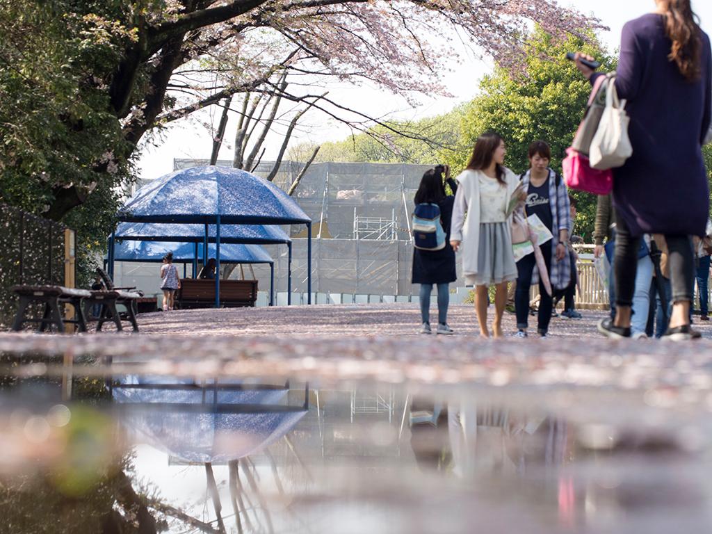 雨上がりの動物園