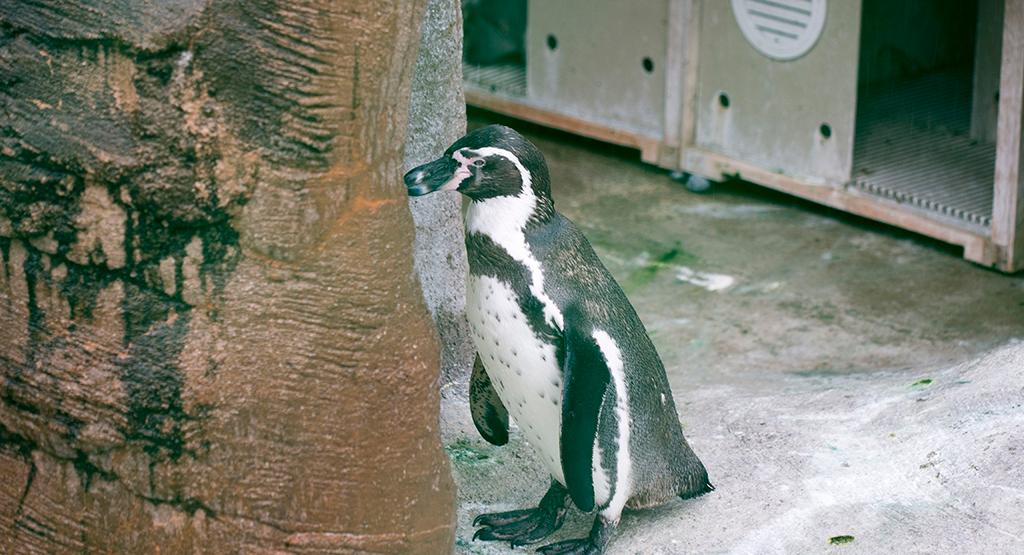 たそがれるペンギン