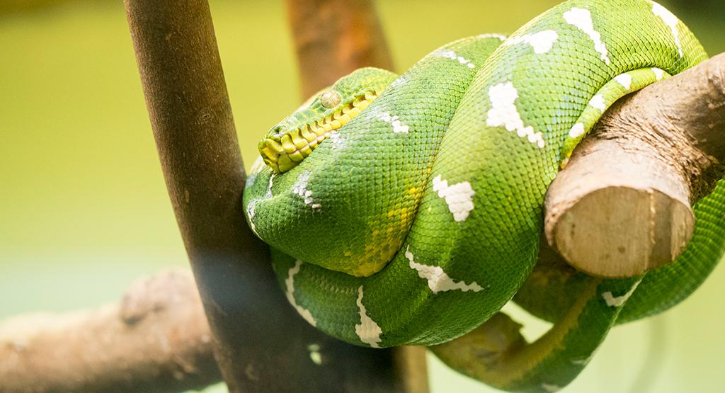 緑色の鮮やかなヘビ