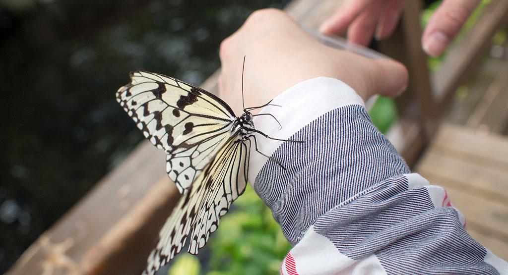 手に乗る蝶