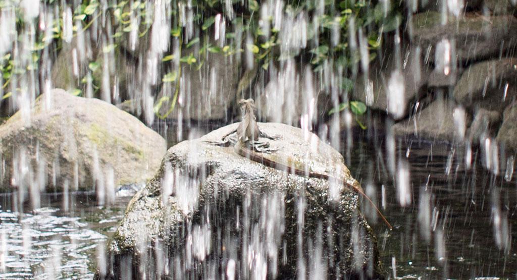 滝の向こうにいるトカゲ