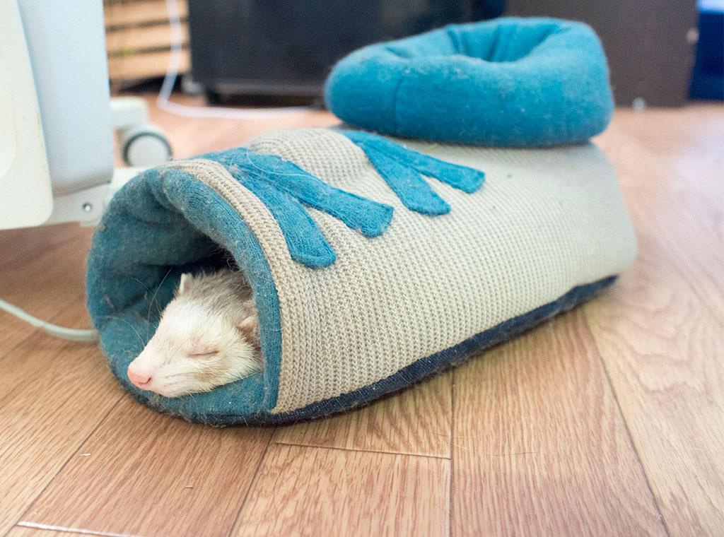 靴の中で寝るこがね